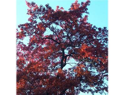 Photograph - The Mighty Oak by Lila Mattison