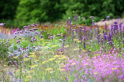 Blue Flowers Photograph - The Millennium Garden At Pensthorpe by Ashley Cooper