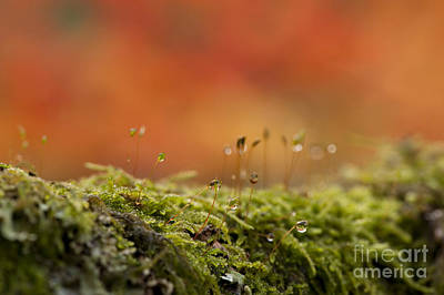 The Miniature World Of Moss  Print by Anne Gilbert