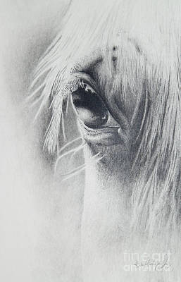 Horse Eye Drawing - The Mirror by Katie Hendrix Long