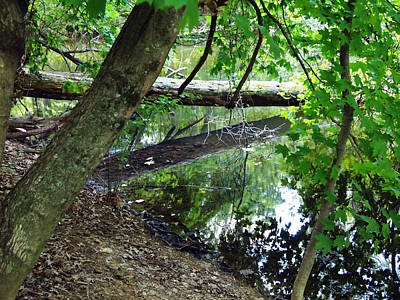 Art Print featuring the photograph The Mirrored Tree by Deborah Fay