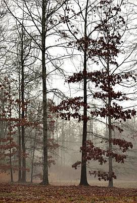Photograph - The Mist by Maria Urso