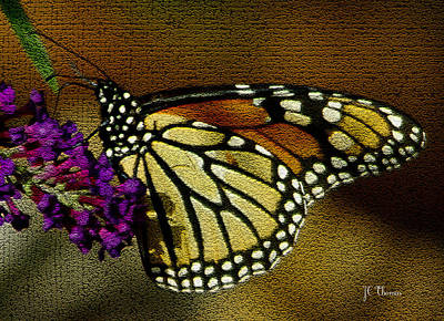 Photograph - The Monarch / Butterflies by James C Thomas