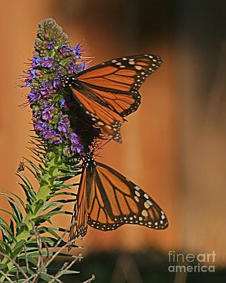 Photograph - The Monarch Butterflies Of Pacific Grove By Pat Hathaway by California Views Mr Pat Hathaway Archives