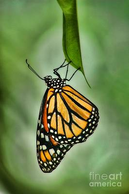 Photograph - The Monarch by Peggy Hughes