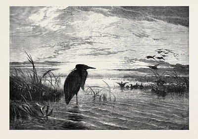 Herons Drawing - The Months A Solitary Christmas Eve by English School