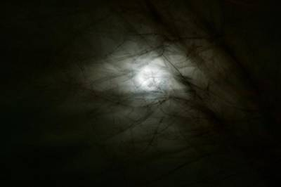 Photograph - The Moon And The Wind And The Trees by Leanna Lomanski