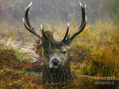 Stag Party The Series The Morning After Art Print