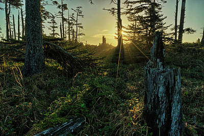 Haida Gwaii Photograph - The Morning Sunlight Filters by Robert Postma