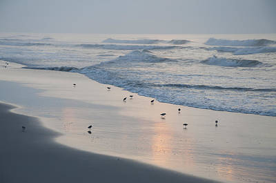 Seagull Digital Art - The Morning Surf by Bill Cannon