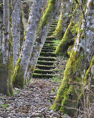 Photograph - The Moss Stairs by Kirt Tisdale