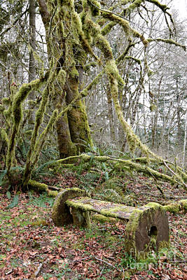 Photograph - The Mossy Bench by Carol Groenen