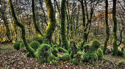 Photograph - The Mossy Creatures Of The  Old Beech Forest 1 by Weston Westmoreland