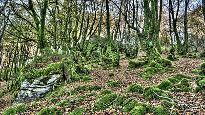 Photograph - The Mossy Creatures Of The  Old Beech Forest 7 by Weston Westmoreland