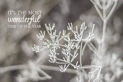 Photograph - The Most Wonderful Time Of The Year by Aldona Pivoriene