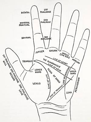 Palmistry Drawing - The Mount Aras Of The Hand by English School