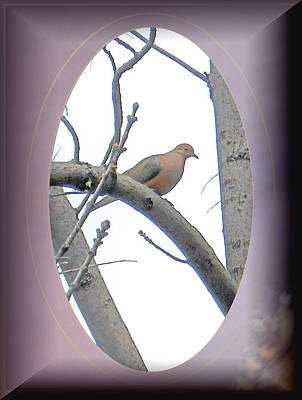 The Mourning Dove Art Print by Patricia Keller
