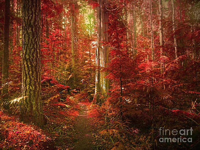 Foilage Photograph - The Mystic Forest by Tara Turner