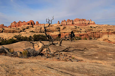 The Needles At Canyonlands National Park Art Print