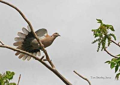 Art Print featuring the photograph The New Dove In Town by Tom Janca