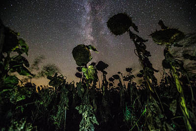Sunflowers Royalty-Free and Rights-Managed Images - The Night of the Triffids by Aaron J Groen