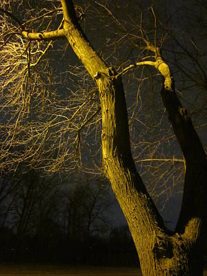 Photograph - The Noise Of Trees by Guy Ricketts