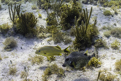 Trunkfish Wall Art - Photograph - The Odd Couple by Lynne Browne