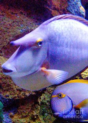 Photograph - The Odd Couple Of The Aquarium by Barbie Corbett-Newmin