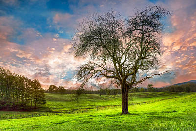 The Old Apple Tree At Dawn Art Print by Debra and Dave Vanderlaan