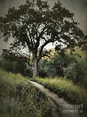 The Old Chumash Trail Art Print