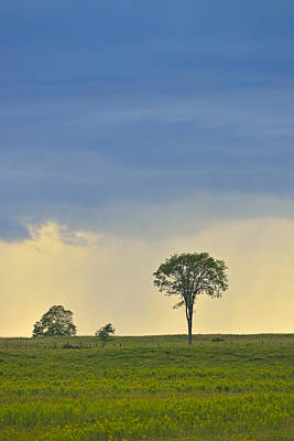 Photograph - The Old Elm by Joshua McCullough