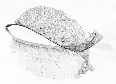 Magnolia Photograph - The Old Leaf by Katarina Holmstr?m