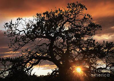 Digital Art - The Old Oak by Angelika Drake
