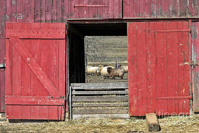 Photograph - The Old Sheep Barn by Olivier Le Queinec