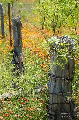 Marble Falls Texas Old Stalwart Fence Posts Original