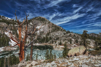The Old Tree And Lake Mary Art Print by Mitch Johanson