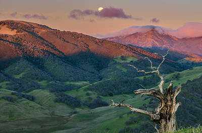 Animal Watercolors Juan Bosco - The Old Tree And Setting Moon With Mt Diablo by Marc Crumpler