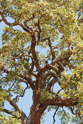 Photograph - The Old Tree by Connie Fox