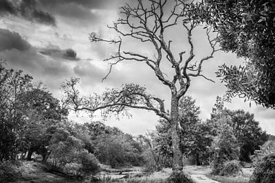 Photograph - The Old Tree by Gary Gillette