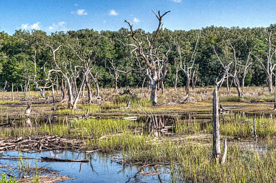 Photograph - The Old Tree Graveyard by Scott Hansen