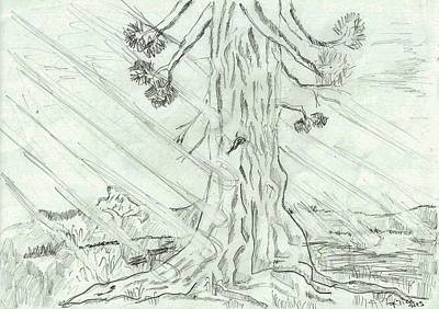 Hike Drawing - The Old Tree In Spring Light  - Sketch by Felicia Tica