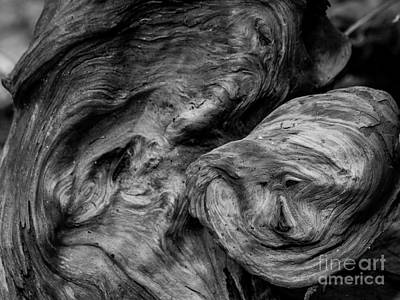 Photograph - The Old Tree by Ken Frischkorn