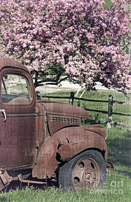 Rusty Old Trucks Photograph - The Old Truck And The Crab Apple by Edward Fielding
