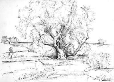 Country Schools Drawing - The Old Willow Tree by Maxine Cameron