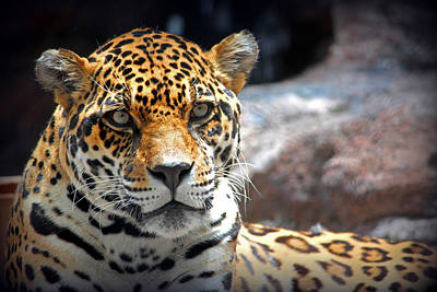 The Ole Leopard Don't Change His Spots Art Print by Lynn Sprowl