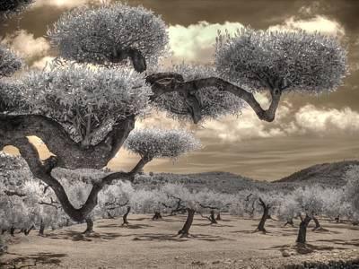 The Olive Grove Art Print