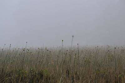 Photograph - The Onion Field by Sue McGlothlin