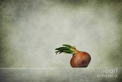 Vegetables Photograph - The Onions by Diana Kraleva
