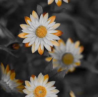 Flower Photograph - The Orange Fringe by Samantha Eisenhauer