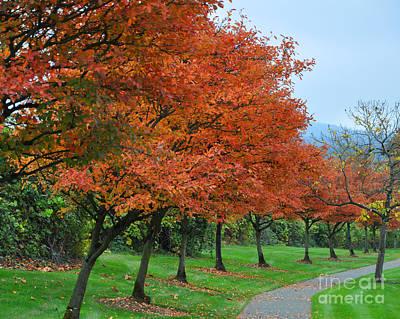 Photograph - The Orange Walk by Kirt Tisdale